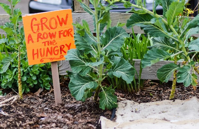 Grow a Row for the Hungry Solidarity Gardens