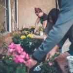 planting springtime flowers