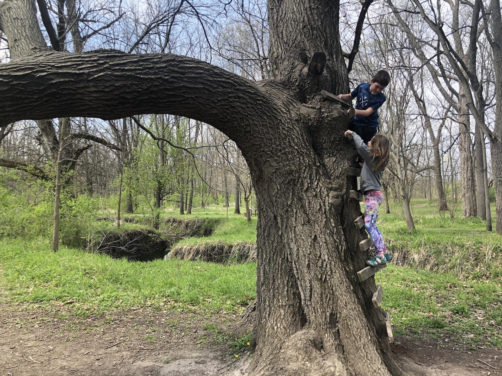 Climbing Trees at Imagination Grove