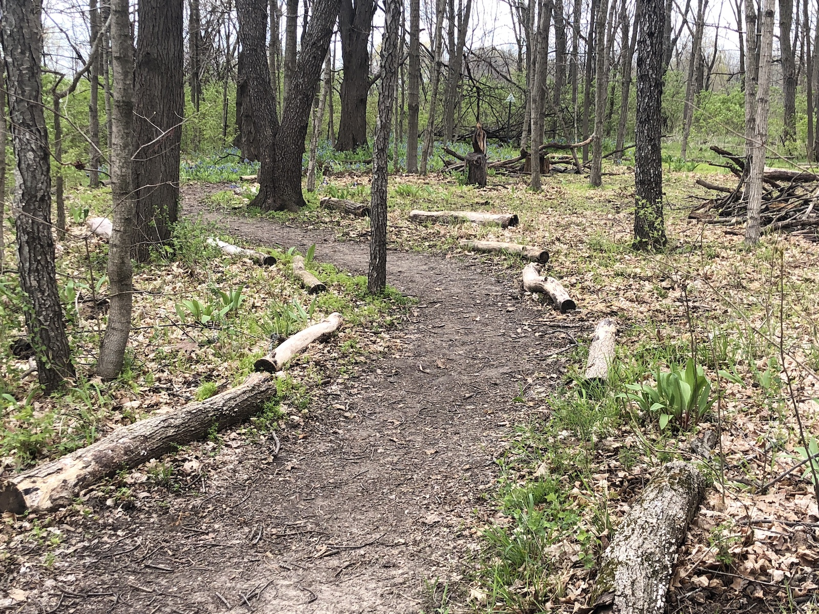 Trails at Imagination Grove