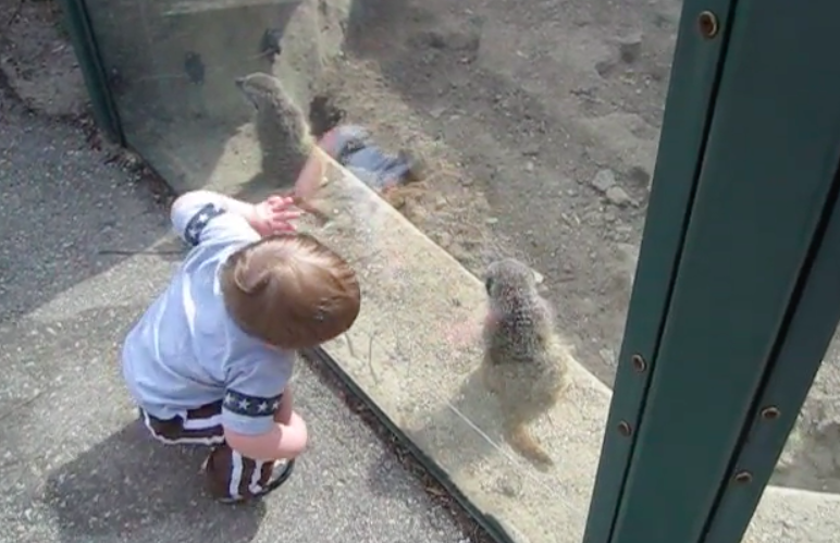 Meerkats at Henry Vilas Zoo