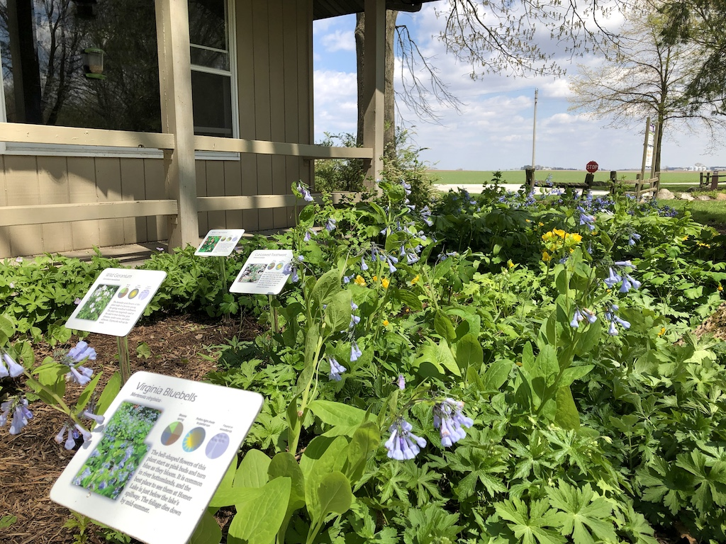 Wildflowers with signs at the Homer Lake Interpretive Center