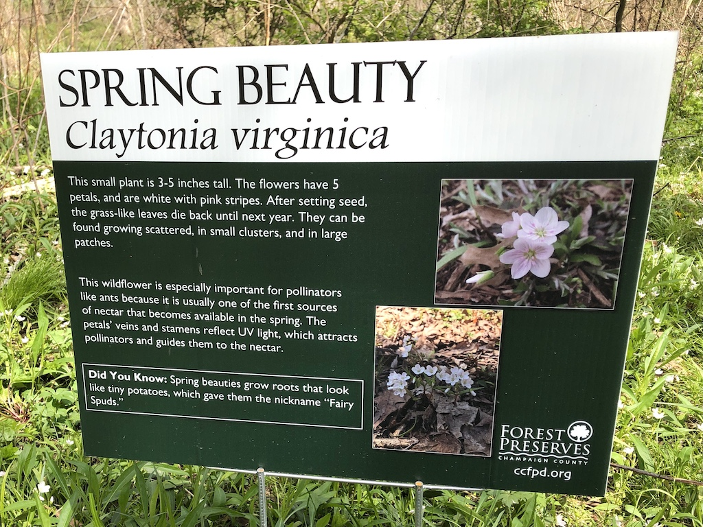 Sign identifying Spring Beauty
