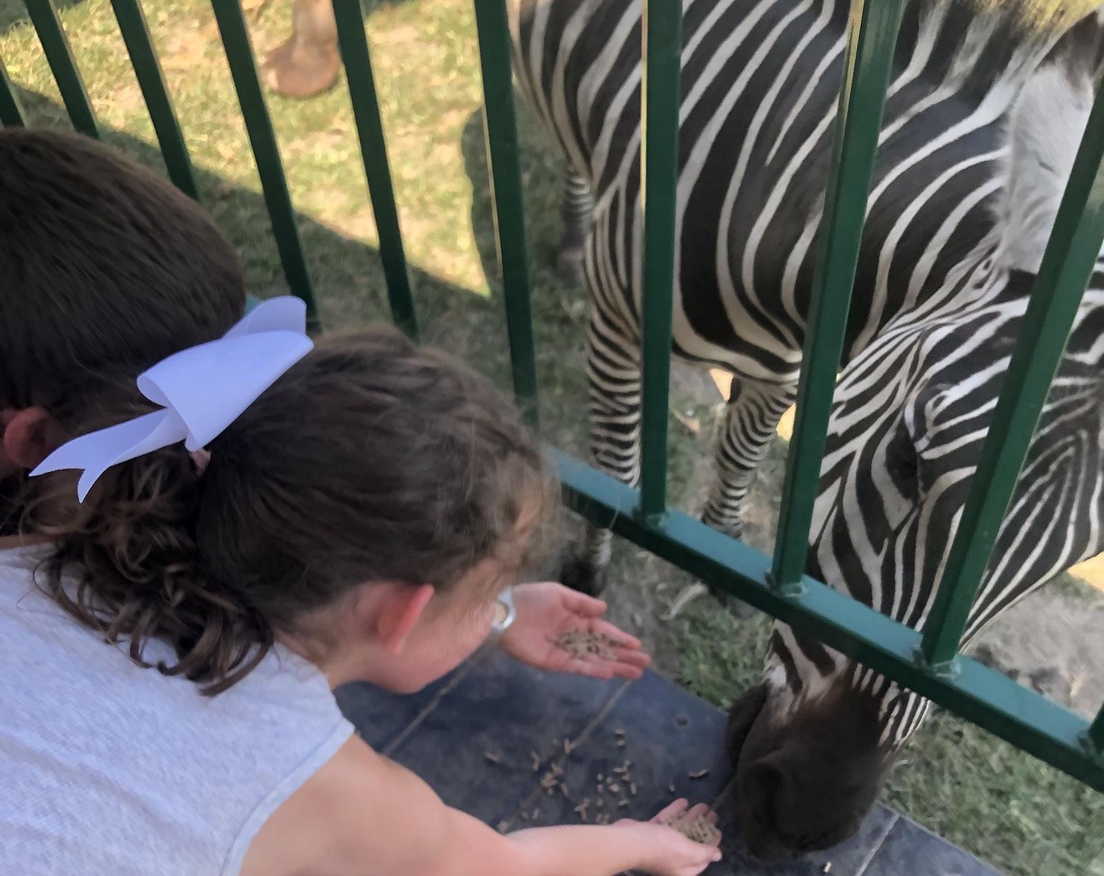 Aikman Wildlife Zebras