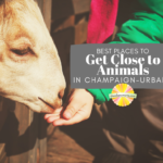 Get Close to Animals in Champaign-Urbana and Beyond
