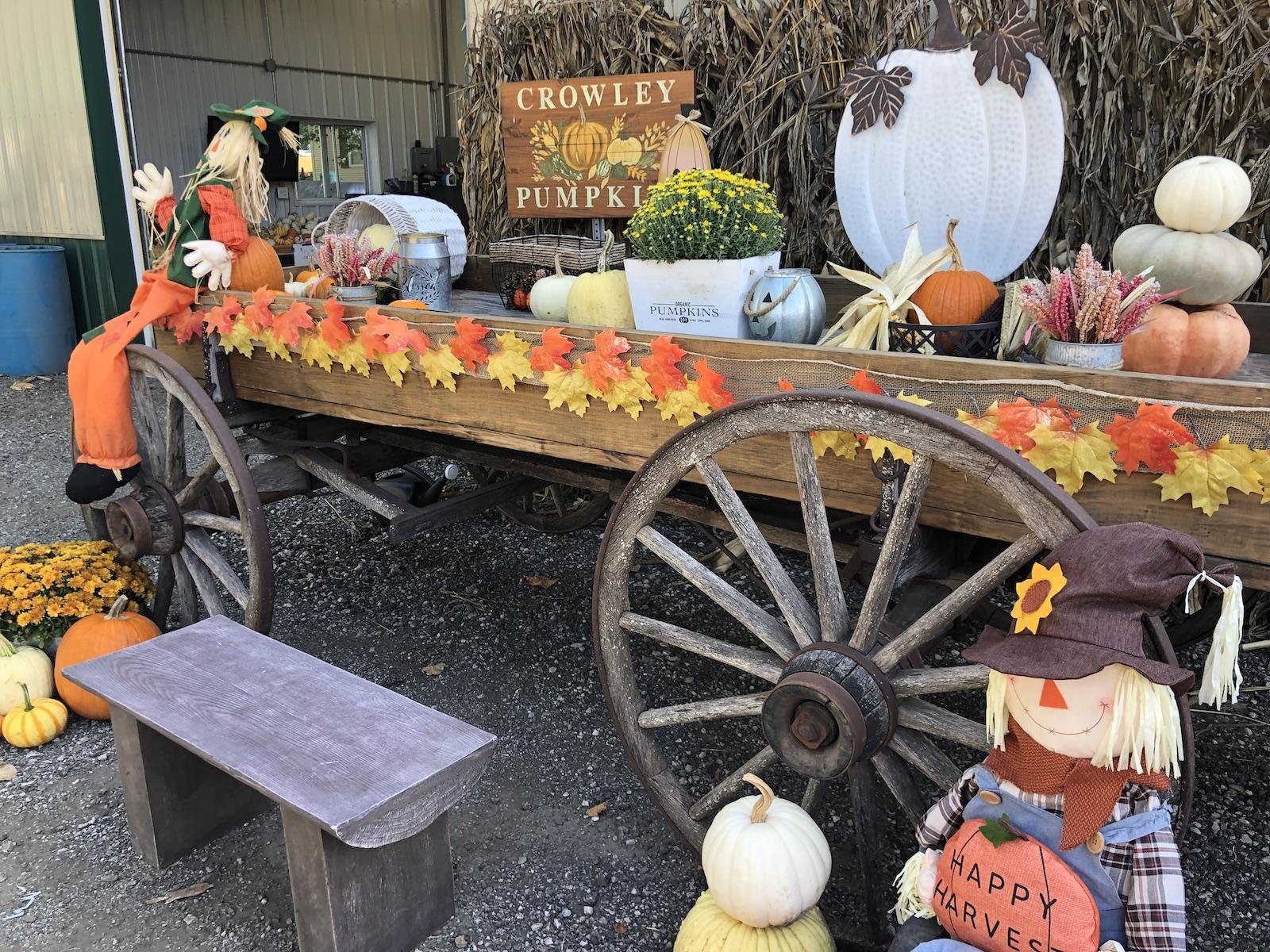 Crowley Pumpkins Photo Spot