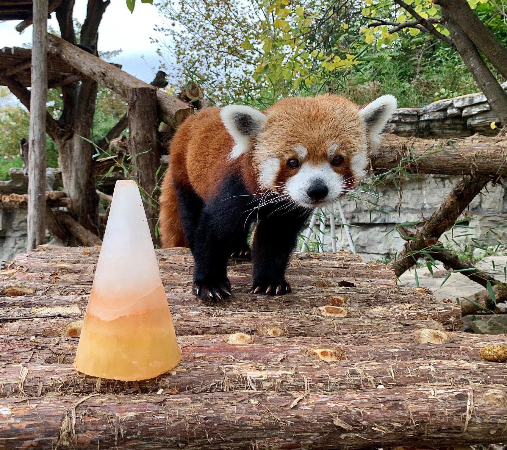 Saint Louis Zoo animals celebrating Halloween
