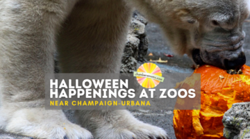 Boo at the Zoo and Other Halloween Events Near Champaign-Urbana