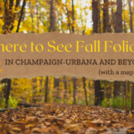 Where to See Fall Foliage in Champaign-Urbana and Beyond
